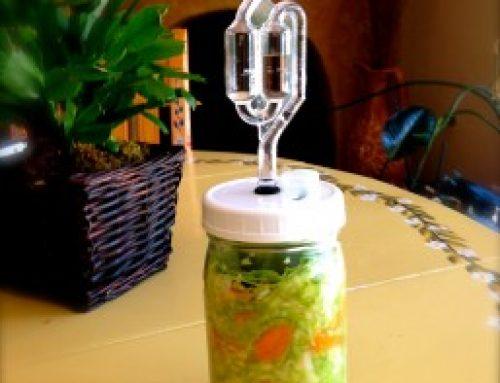 Fermented Foods  –  Sauerkraut